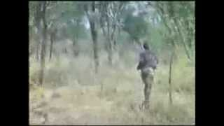 Moments of Truth Part 4 Hunting African Lion with Recurve Bow!