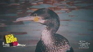 donGURALesko - Wyspa Kormoranów (prod. White House feat. mały72, skr. Dj Kostek) [MASH UP by Lolek]