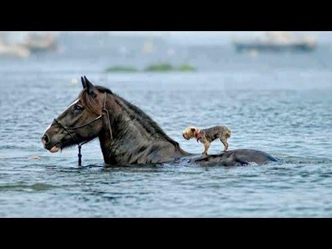 Intenta no llorar con este vídeo 2016. Animales héroes, muy hermosos