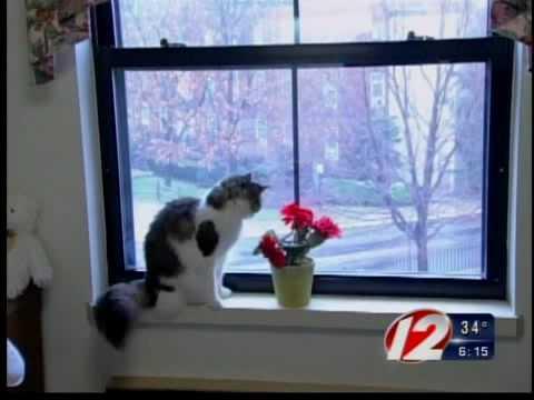 Street stories - oscar the cat