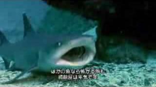 サメの戦場5