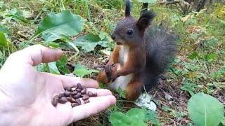 Squirrel Found Frozen in Time