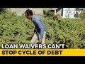 Has The Loan Waiver Helped Rajasthan, Madhya Pradesh Farmers?