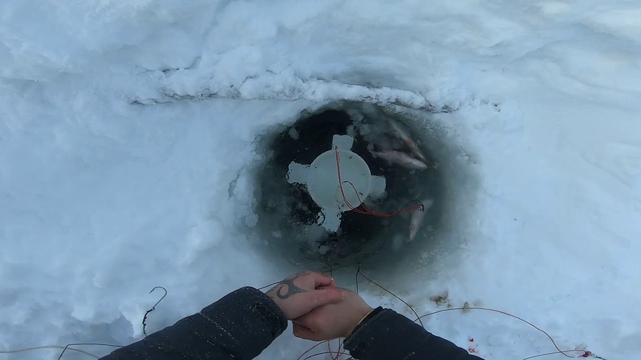 Ловля налима зимой на вершу