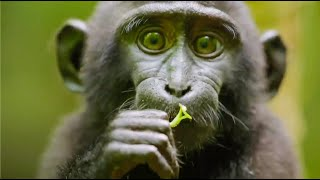 Best Monkey Moments | BBC Earth