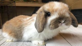 Funny Baby Bunny Rabbit Videos #9 - Cute Rabbits 2018