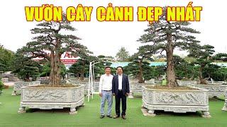 Theo chân bác Dũng Tân thăm toàn bộ vườn cây cảnh đẹp nhất TN