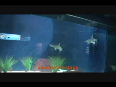 bamboo shark tank - photo #33