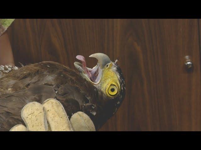 南港多起禽鳥遭攻擊 鋼珠彈碎骨