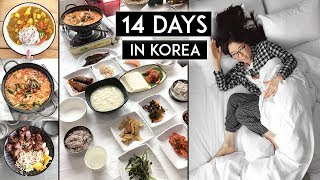 14 Days in Korea ♦ SO MUCH FOOD! 🍲 🍰 🍜