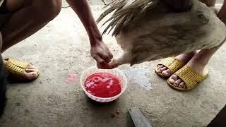 Nghệ thuật cắt tiết canh bằng chân.siêu đỉnh