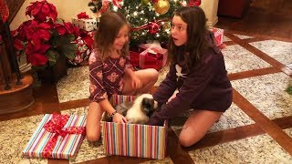Christmas Puppy Surprise Compilation 2018 - 2019 [NEW]
