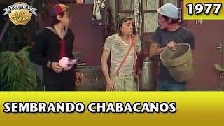 El Chavo | Sembrando chabacanos (Completo)