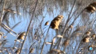 Parc Natural del Delta de l'Ebre: Essència