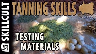Testing a Bunch of Natural Leather Tanning Materials- leaves, barks, roots, acorn caps, etc.