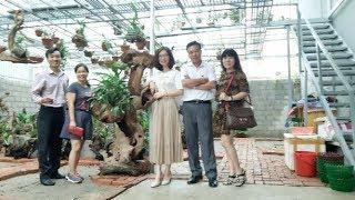 Bài Học Từ Vườn Lan Quy Củ Đẹp Đến Bất Ngờ Của Chị Trịnh Kim Dung (Lạng Sơn) [HOALANTV]