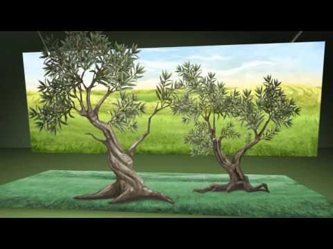 MO' clip 7: l'extra vergine e l'ambiente