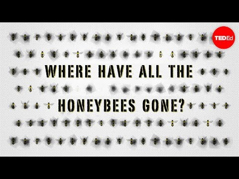 The case of the vanishing honeybees - Emma Bryce thumbnail