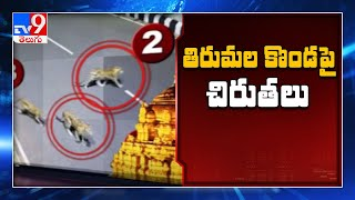 Leopards, Bear spotted on Tirumala streets, viral video..