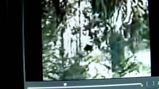 M K Davis looks closely at Paul Freeman's video