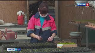 Омские агрономы уже приступили к выращиванию рассады для цветников, которые украсят город ко Дню Победы