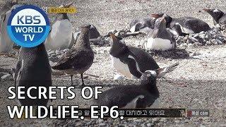 Secrets of Wildlife I 은밀하고 위대한 동물의 사생활 – Ep.6 [ENG/2019.01.16]