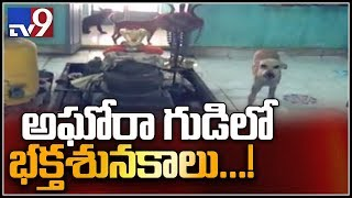 Dogs serve Lord at Jai Narayana temple in East Godavari..