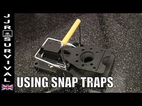 How To Trap A Mouse In A Snap Trap