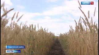 «Вести Омск», утренний эфир от 21 августа 2021 года