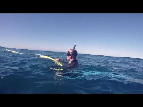 video Sunshine Coast Swim with Whales