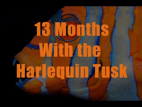 13 Months with The Australian Harlequin Tusk