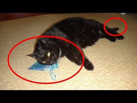 Цыганский метод лечения болезней глаз. Магическая чёрная кошка photo