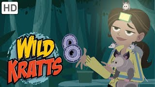 Wild Kratts 🌿🐊 Explore the Everglades!   Kids Videos