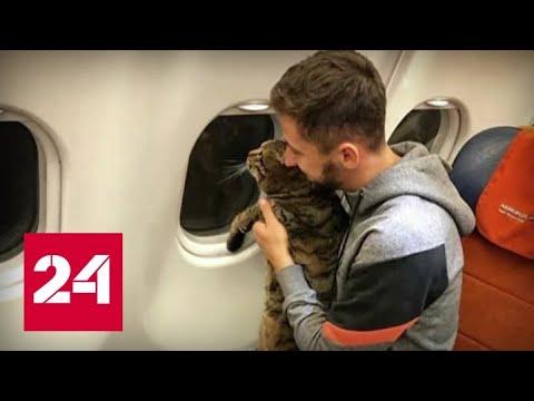 Уроки кота Виктора: как правильно перевозить питомца в самолете - Россия 24