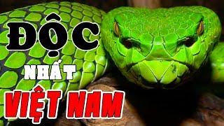 Nọc Độc Giết 1000 Người Và Những Loài Rắn Nguy Hiểm Nhất Việt Nam