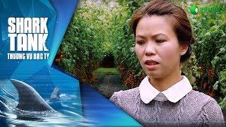 Cà Chua Lại Ngọt - Happy Trees   Shark Tank Việt Nam