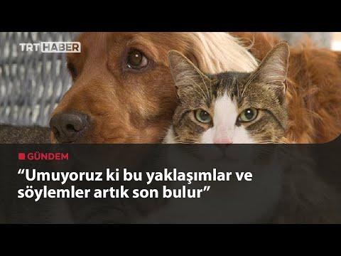 Evcil hayvanlara çip zorunluluğu