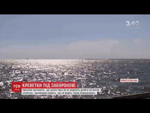На Миколаївщині виник скандал навколо вилову креветок на Кінбурнській косі