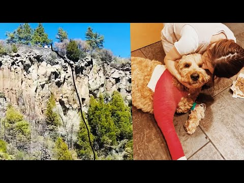 Dog Survives 200-Foot Fall Off Cliff