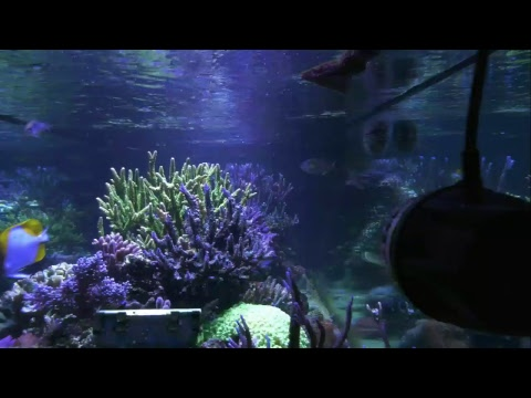 Mr. Saltwater Tank TV Live Stream