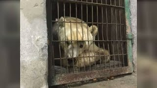 Former Circus Bear Can't Believe It When He Sees His Sprawling New Home