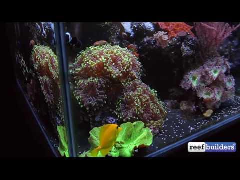 My Satellite Reef Aquarium