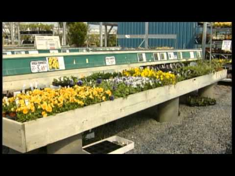 Jespers Planteskole stauder 2013 - YouTube