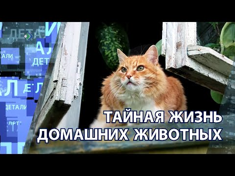 """""""Детали недели"""" - Тайная жизнь домашних животных"""