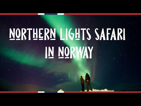 People under the northern lights | The northern lights hunter Trond