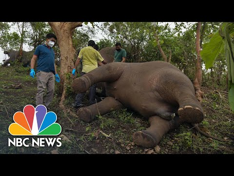Elephants 'Killed By Lightning' Found In Indian Forest