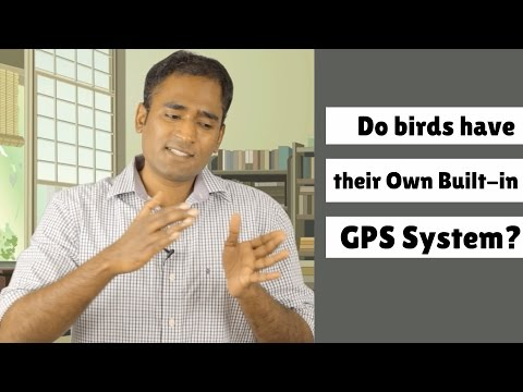 Do birds have their Own Built-in GPS System?