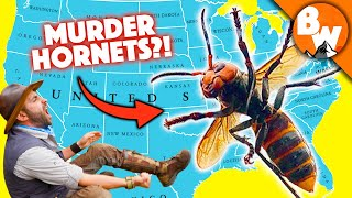 MURDER HORNET MADNESS! - 10 Things You NEED to know!