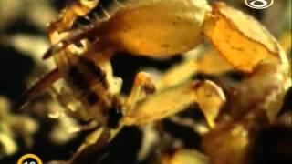 Zvierací rekordmani - Odolné mláďatá