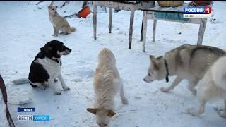 Беда случилась в приюте для собак